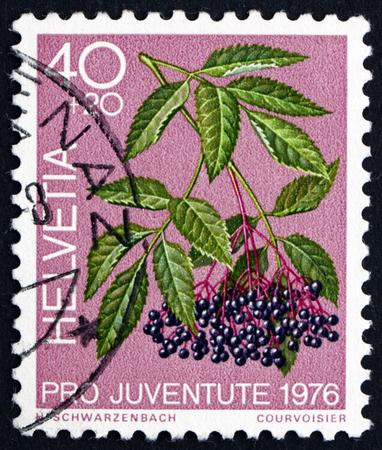 poststempel: SCHWEIZ - CIRCA 1976: einen Stempel in der Schweiz gedruckt zeigt Schwarzer Holunder, Sambucus Nigra, Heilwald Pflanze, circa 1976