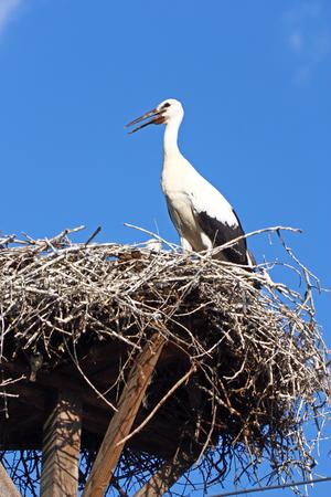 power pole: Stork in the nest on power pole