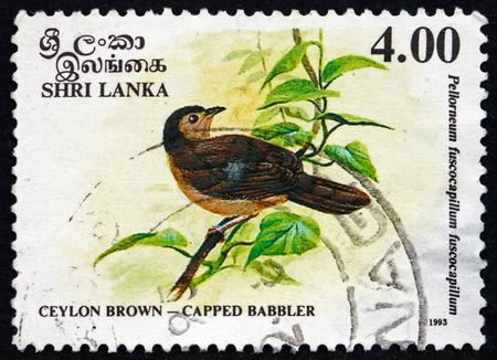 resident: SRI LANKA - CIRCA 1993: a stamp printed in Sri Lanka shows Brown-capped Babbler, Pellorneum Fuscocapillus, is an Endemic Resident Breeding Bird in Sri Lanka, circa 1993