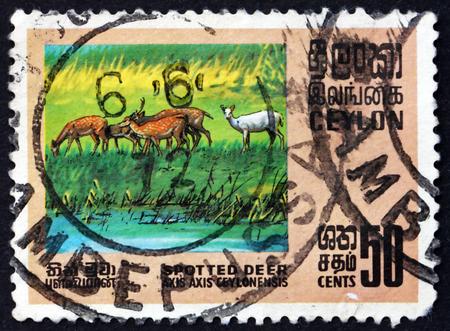 subcontinent: SRI LANKA - CIRCA 1970: a stamp printed in Sri Lanka shows Axis Deer, Axis Axis, is Deer Found in the Indian Subcontinent ans Sri Lanka, circa 1970