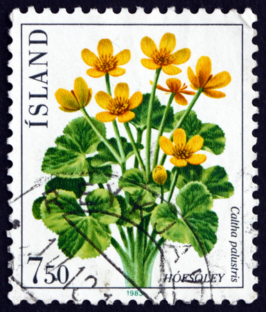 herbaceous: ICELAND - CIRCA 1983: a stamp printed in the Iceland shows Marsh-marigold, Caltha Palustris, Perennial Herbaceous Plant, circa 1983