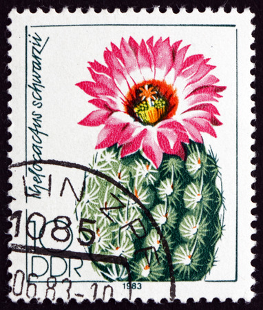 cactus species: GERMANY - CIRCA 1983: a stamp printed in Germany shows Thelocactus Schwarzii, is a Species of Cactus, circa 1983