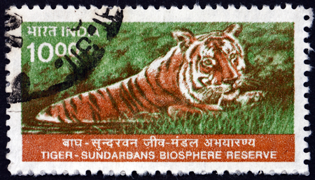 biosphere: INDIA - CIRCA 2000: a stamp printed in India shows Tiger, Panthera Tigris, Sundarbans National Biosphere Reserve, circa 2000 Editorial