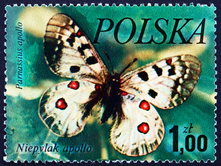 POLAND - CIRCA 1977: a stamp printed in the Poland shows Mountain Apollo, Parnassius Apollo, Butterfly, circa 1977