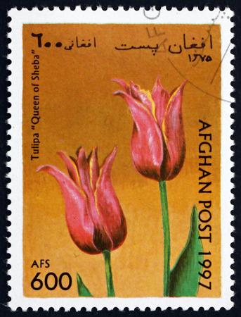queen of sheba: AFGHANISTAN - CIRCA 1997: a stamp printed in Afghanistan shows Tulip, Queen of Sheba, Flower, circa 1997