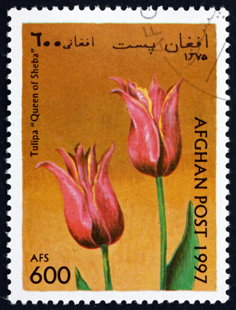 AFGHANISTAN - CIRCA 1997: a stamp printed in Afghanistan shows Tulip, Queen of Sheba, Flower, circa 1997