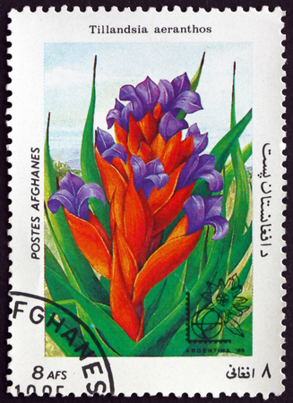 tillandsia: AFGHANISTAN - CIRCA 1985: a stamp printed in Afghanistan shows Tillandsia Aeranthos, Flowering Plant, circa 1985