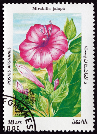 marvel: AFGHANISTAN - CIRCA 1985: a stamp printed in Afghanistan shows Marvel of Peru, Mirabilis Jalapa, Flowering Plant, circa 1985 Editorial