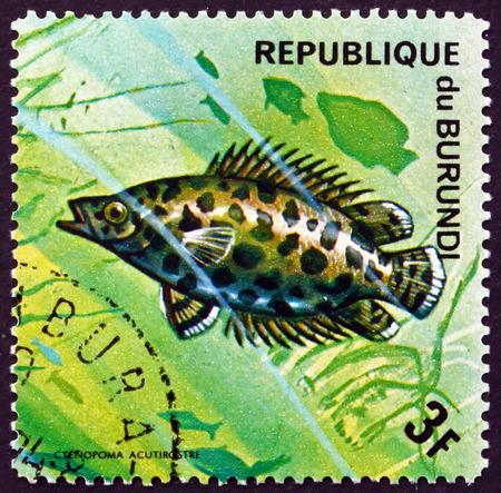 BURUNDI - CIRCA 1974: a stamp printed in Burundi shows Leopard Bush Fish, Ctenopoma Acutirostre, Freshwater Fish, circa 1974