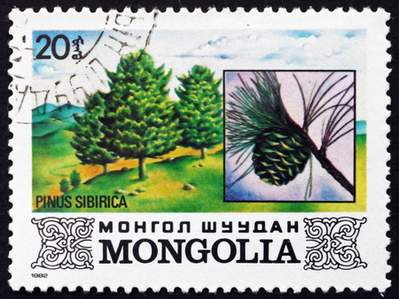 arbol de problemas: MONGOLIA - CIRCA 1982: a stamp printed in Mongolia shows Siberian Pine, Pinus Sibirica, Tree, circa 1982 Editorial