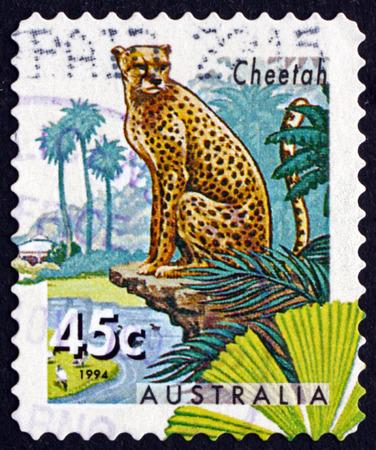 acinonyx: AUSTRALIA - CIRCA 1994: a stamp printed in Australia shows Cheetah, Acinonyx Jubatus, Big Cat, circa 1994