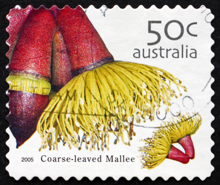AUSTRALIA - CIRCA 2005: a stamp printed in Australia shows Coarse-leaved Mallee, Eucalyptus Grossa, Plant, circa 2005