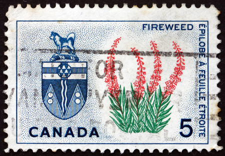 canada stamp: CANADA - CIRCA 1966: a stamp printed in the Canada shows Fireweed and Arms of Yukon, circa 1966 Editorial