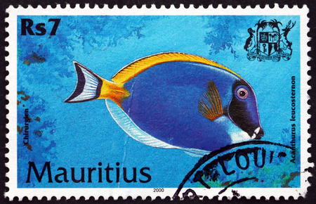MAURITIUS - CIRCA 2000: a stamp printed in Mauritius shows Powder blue tang, acanthurus leucosternon, is a species of marine tropical fish, circa 2000 Editorial