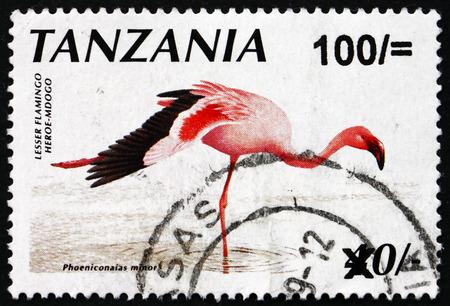 minor: TANZANIA - CIRCA 1998: a stamp printed in Tanzania shows Lesser flamingo, phoeniconaias minor, bird, circa 1998