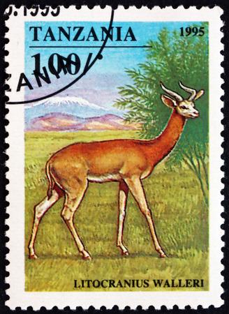 TANZANIA - CIRCA 1995: a stamp printed in Tanzania shows Gerenuk, litocranius walleri, is an African antelope, circa 1995 Editorial