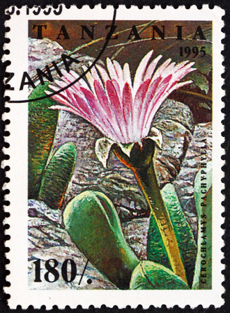 TANZANIA - CIRCA 1995: a stamp printed in Tanzania shows Cerochlamys pachyphylla, flowering plant, circa 1995