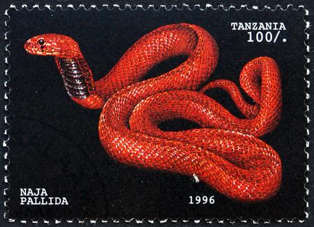 spitting: TANZANIA - CIRCA 1996: a stamp printed in Tanzania shows Red spitting cobra, naja pallida, snake, circa 1996