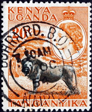 perforated: EAST AFRICAN POSTAL UNION - CIRCA 1954: a stamp printed in the East African Postal Union (Kenya, Uganda, Tanganyika) shows Lion, panthera leo, animal, circa 1954 Editorial