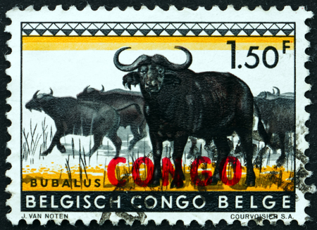 philately: CONGO - CIRCA 1960: a stamp printed in Congo shows African buffalo, syncerus caffer, is a large African bovine, circa 1960