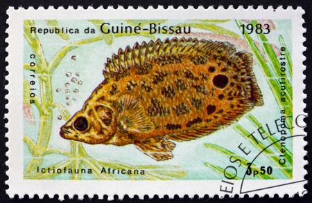 GUINEA-BISSAU - CIRCA 1983: a stamp printed in Guinea-Bissau shows Leopard Bush Fish, Ctenopoma Acutirostre, Freshwater Fish, circa 1983