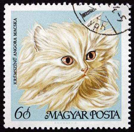 HUNGARY - CIRCA 1968: a stamp printed in Hungary shows Cream Persian, Domestic Cat, circa 1968 Editorial