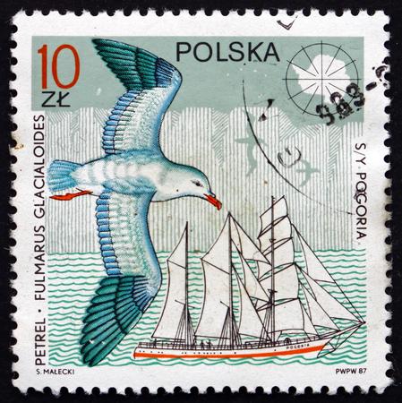 POLAND - CIRCA 1987: a stamp printed in Poland shows Southern Fulmar, Fulmarus Glacialoides, and Yacht Pogoria, circa 1987
