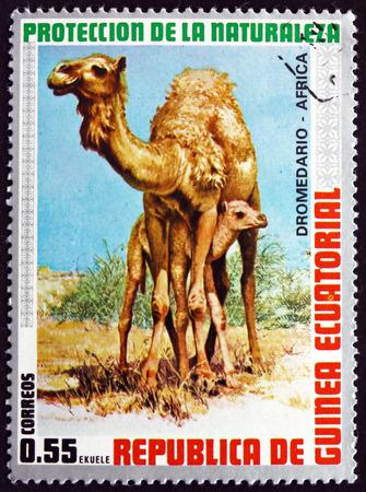 EQUATORIAL GUINEA - CIRCA 1974: a stamp printed in Equatorial Guinea shows Dromedary, Camelus Dromedarius, Animal, circa 1974 Editorial