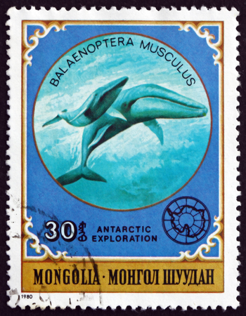MONGOLIA - CIRCA 1980: a stamp printed in Mongolia shows Giant Blue Whale, Balaenoptera Musculus, is a Marine Mammal, circa 1980