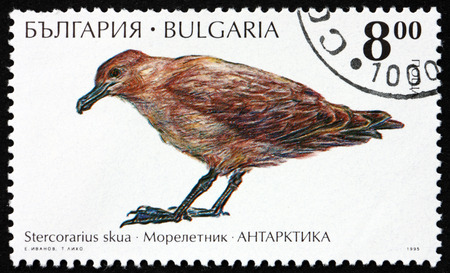 BULGARIA - CIRCA 1995: a stamp printed in Bulgaria shows Great Skua, Stercorarius Skua, is a Large Seabird, Antarctic Wildlife, circa 1995