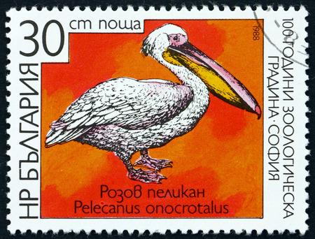 BULGARIA - CIRCA 1988: a stamp printed in Bulgaria shows Great White Pelican, Pelecanus Onocrotalus, Bird, circa 1988 Editorial