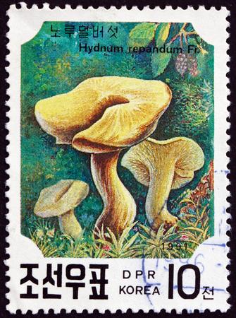 NORTH KOREA - CIRCA 1991: a stamp printed in North Korea shows Sweet Tooth, Hydnum Repandum, is an Edible Mushroom, circa 1991 Editorial