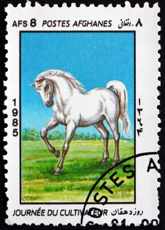 AFGHANISTAN - CIRCA 1985: a stamp printed in Afghanistan shows white horse, farmer�s day, circa 1985
