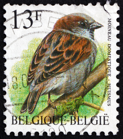 BELGIUM - CIRCA 1994: a stamp printed in the Belgium shows house sparrow, passer domesticus, is a bird of the sparrow family, circa 1994 Editorial