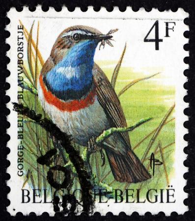 BELGIUM - CIRCA 1989: a stamp printed in the Belgium shows bluethroat, luscinia svecica, small passerine bird, circa 1989