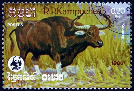 CAMBODIA - CIRCA 1986: a stamp printed in Cambodia shows kouprey, bos sauveli, wild bovine species from Southeast Asia, circa 1986 Editorial
