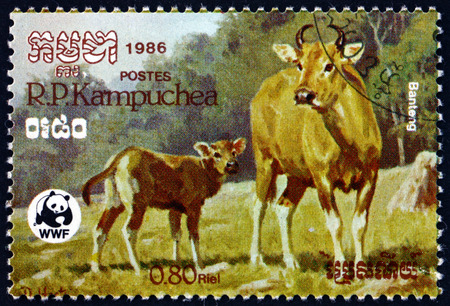 CAMBODIA - CIRCA 1986: a stamp printed in Cambodia shows banteng, bos javanicus, is a species of wild cattle found in Southeast Asia, circa 1986 Editorial