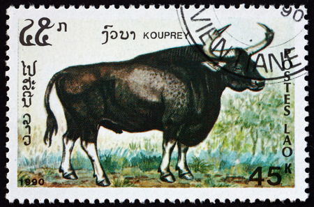 LAOS - CIRCA 1990: a stamp printed in Laos shows kouprey, bos sauveli, wild bovine species from Southeast Asia, circa 1990