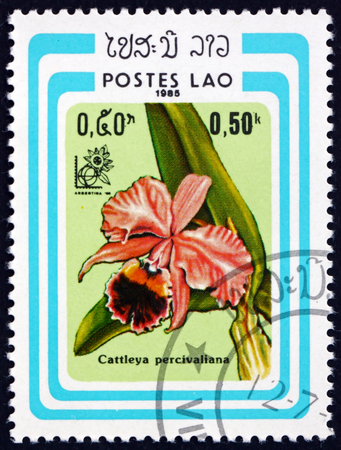 LAOS - CIRCA 1985: a stamp printed in Laos shows cattleya percivaliana, is a species of orchid, circa 1985