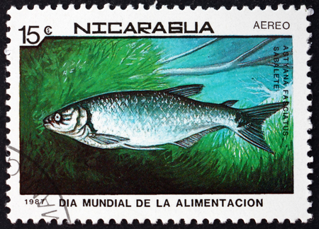 NICARAGUA - CIRCA 1987: a stamp printed in Nicaragua shows banded tetra, astyanax fasciatus, is a freshwater fish, circa 1987 Editorial