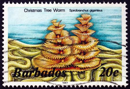 BARBADOS - CIRCA 1985: a stamp printed in Barbados shows Christmas tree worm, spirobranchus giganteus, marine life, circa 1985 Editorial
