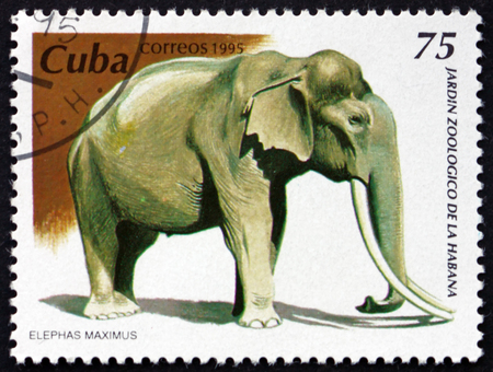 CUBA - CIRCA 1995: a stamp printed in Cuba shows Asian elephant, elephas maximus, is the largest living land animal in Asia, circa 1995