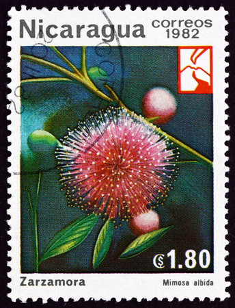 NICARAGUA - CIRCA 1982: a stamp printed in Nicaragua shows mimosa albida, flowering plant, circa 1982 Editorial