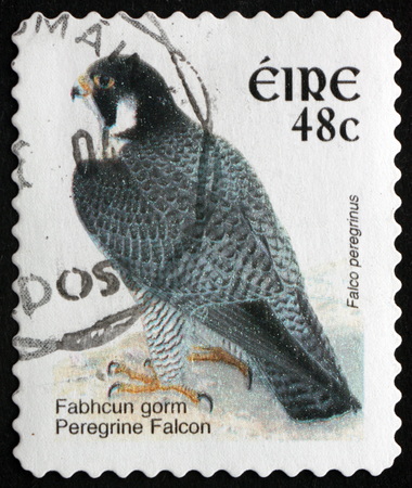 IRELAND - CIRCA 2003: a stamp printed in Ireland shows Peregrine Falcon, Falco Peregrinus, Bird of Prey, circa 2003