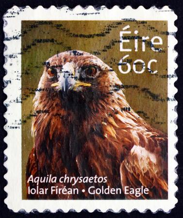 IRELAND - CIRCA 2013: a stamp printed in Ireland shows golden eagle, aquila chrysaetos, Bird of Prey, circa 2013 Editorial