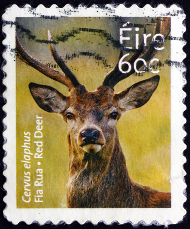 IRELAND - CIRCA 2013: a stamp printed in Ireland shows red deer, cervus elaphus, is one of the largest deer species, mammal, circa 2013 Editorial