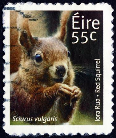 IRELAND - CIRCA 2011: a stamp printed in Ireland shows red squirrel, sciurus vulgaris, animal, circa 2011