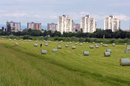 Field full of hay bundles in front of the buildings Stock Photo