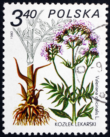 POLAND - CIRCA 1980: a stamp printed in Poland shows Valerian, Valeriana Officinalis, Medicinal Plant, circa 1980