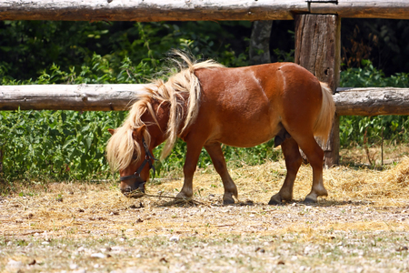 Brown little horse on a summer day Stock Photo
